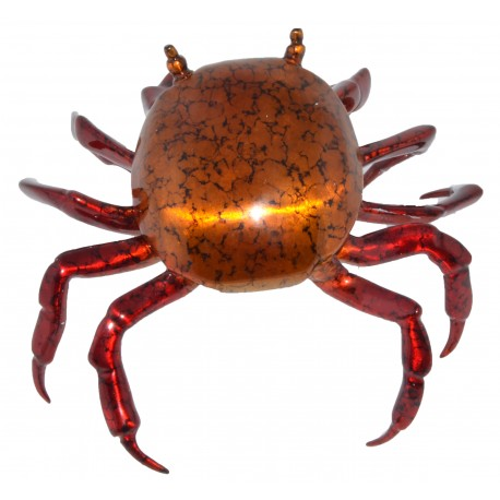 Crab, Sally Lightfoot